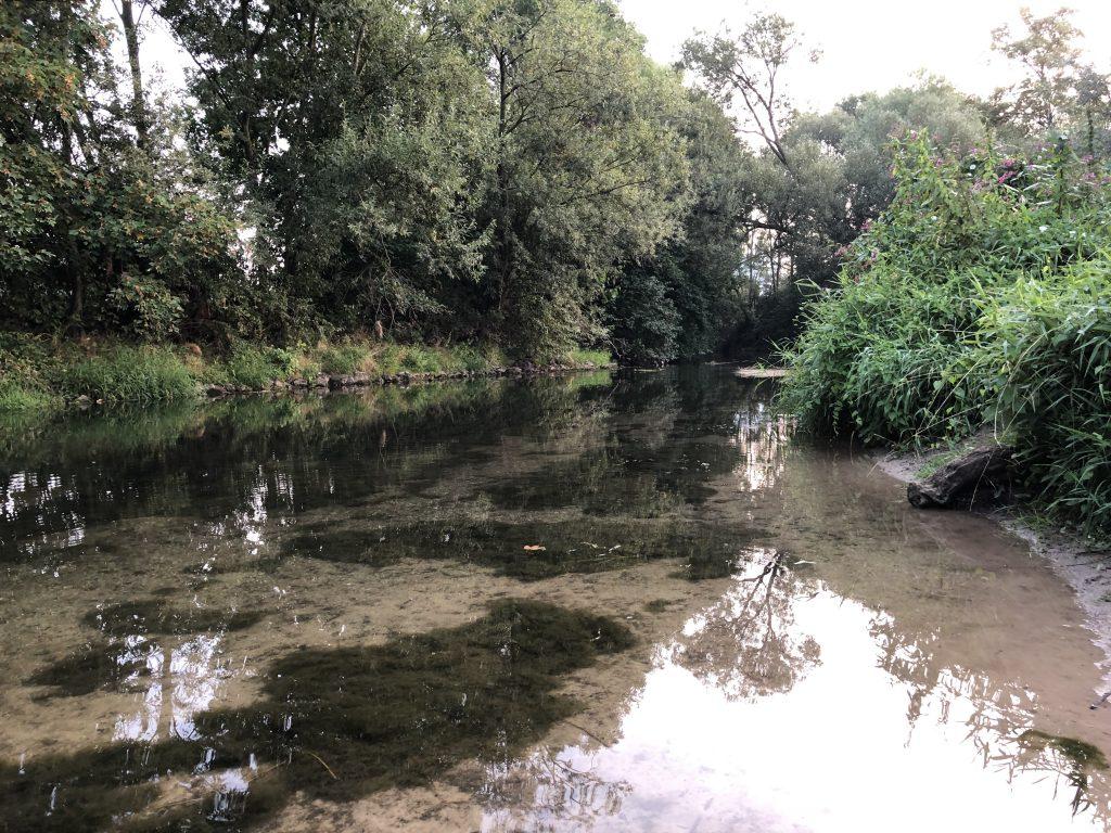 Der Fluß der Selbstspiegelung