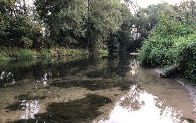 Der Fluss der Selbstspiegelung